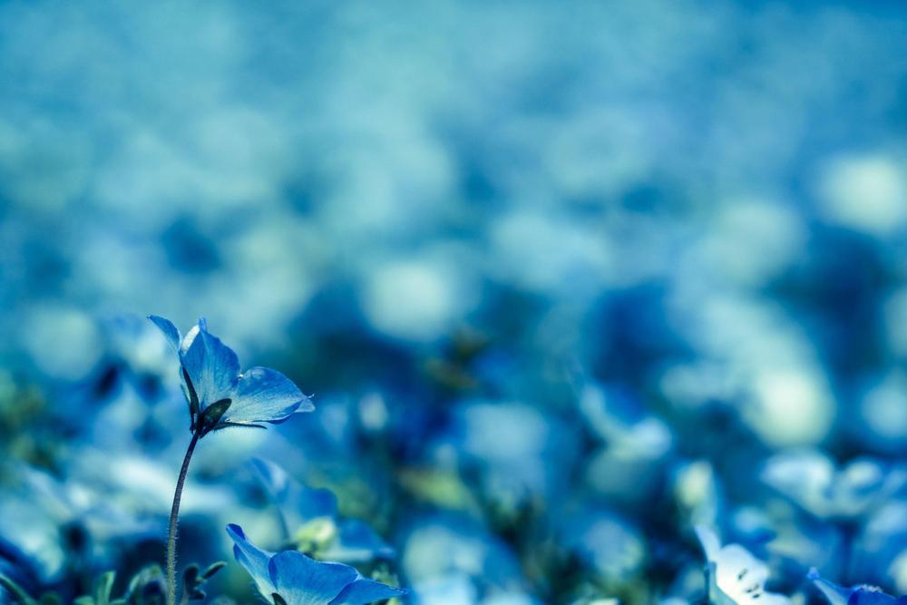 静かに咲く青くてきれいな小さい花