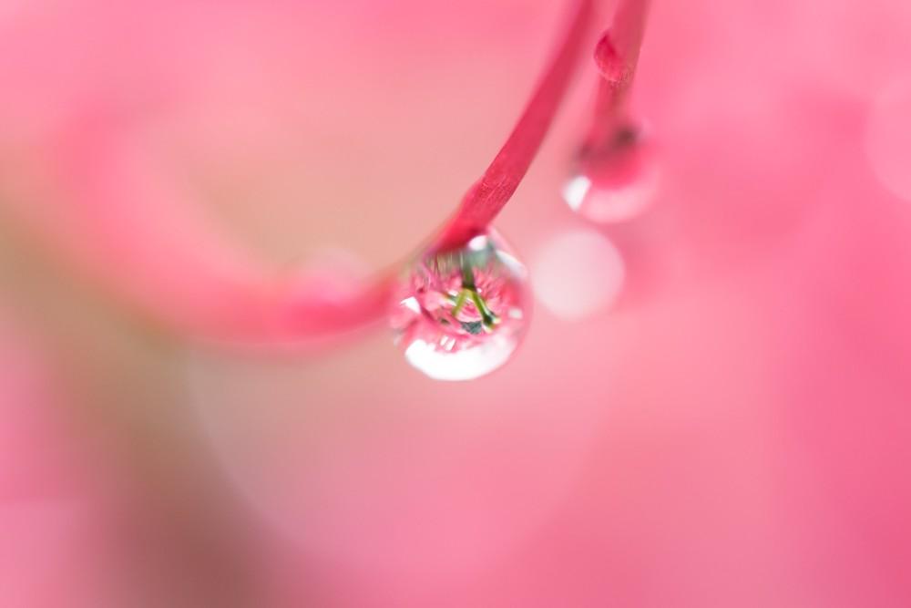 温かい空間の中で実りに実った水滴が今にも落ちそうな瞬間