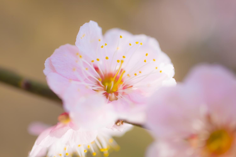 感謝の気持ちに花が咲いた
