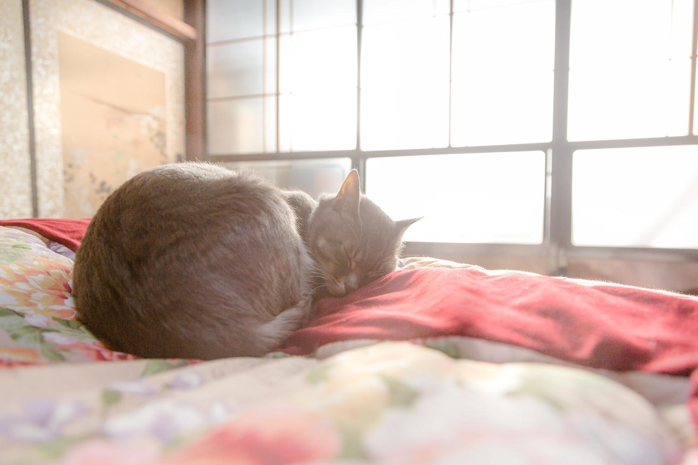 朝日を浴びても気持ちよさそうに丸くなって寝ている猫