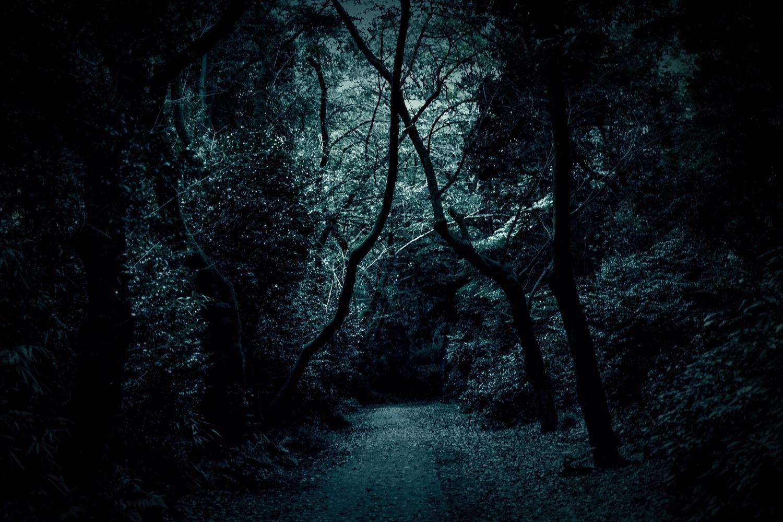 引き込まれそうな暗い森